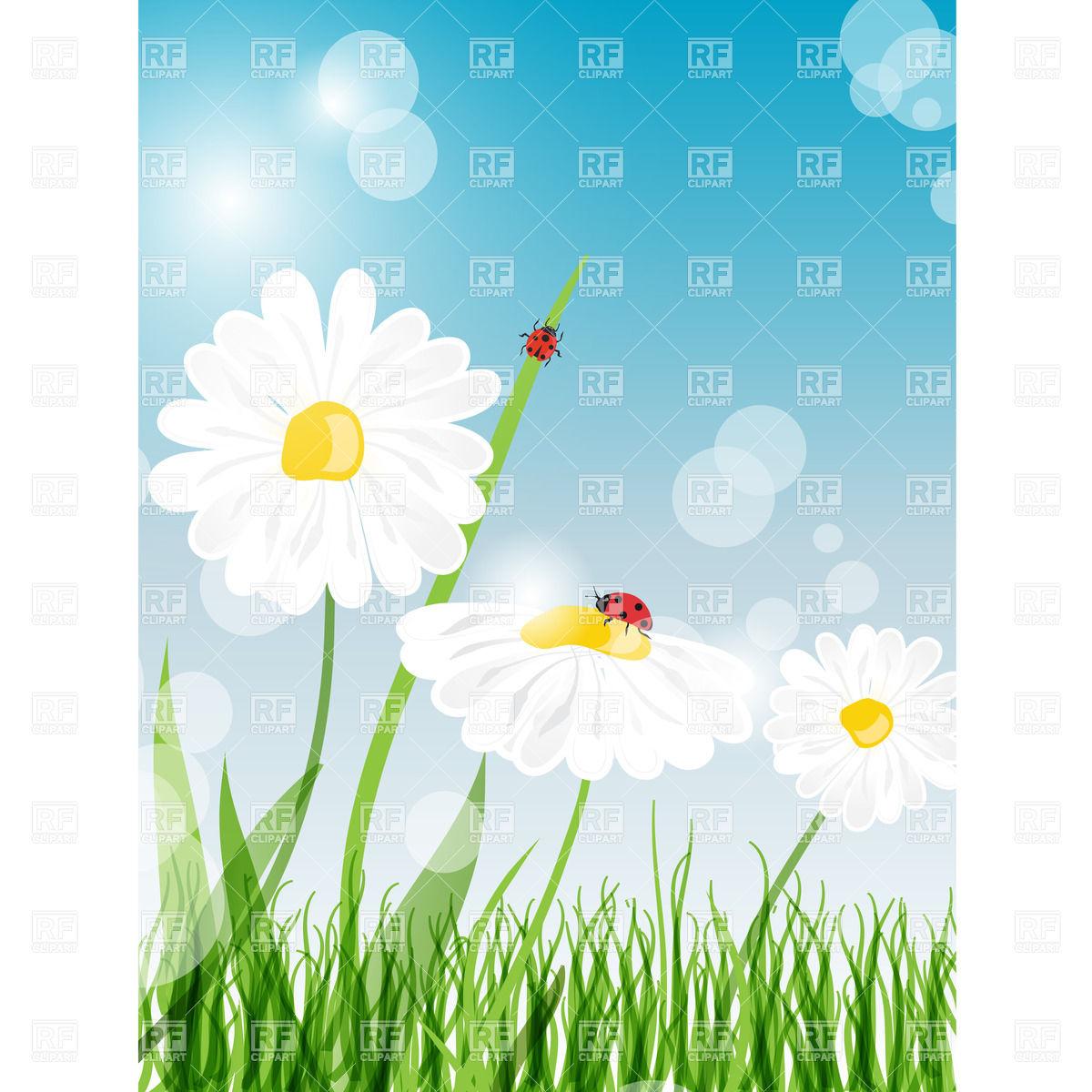 Daisy Flower Vector