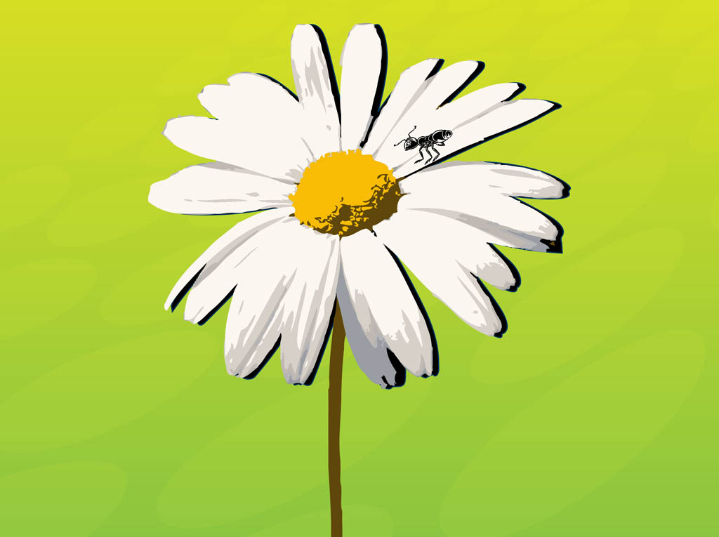 1024x765 Daisy Vector Art Amp Graphics