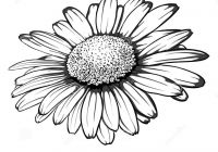 200x140 Daisy Vector Black And White Best Of Daisy Flower Clip Art Free