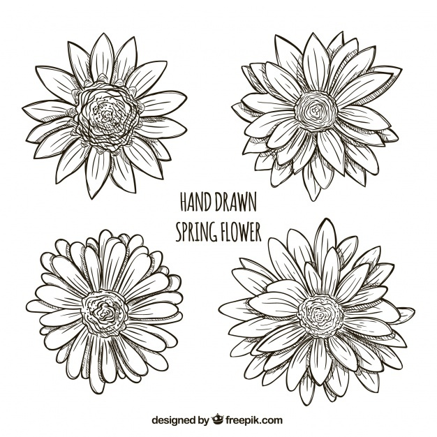 626x626 Daisy Vectors, Photos And Psd Files Free Download
