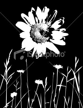 294x380 High Contrast Daisy With Silhouetted Meadow. Ai Cs3 File Included