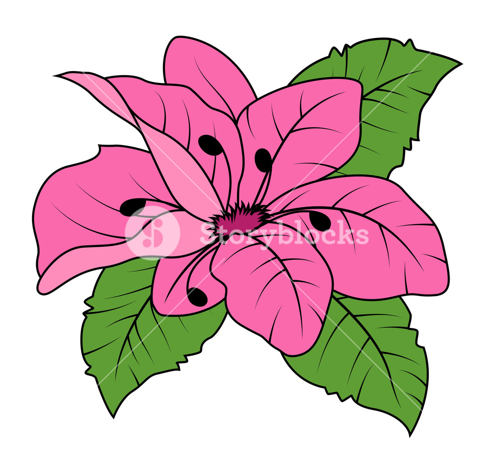 1000x956 Pink Daisy Vector Illustration Royalty Free Stock Image