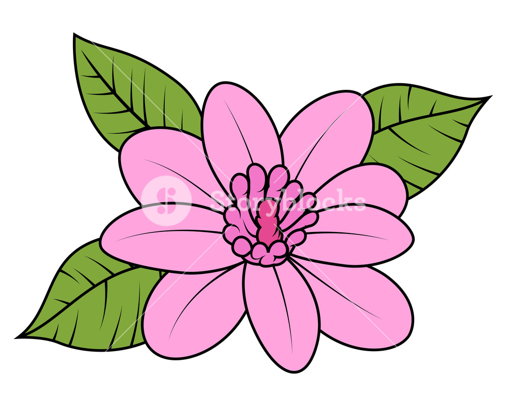 1000x802 Pink Wild Daisy Vector Illustration Royalty Free Stock Image