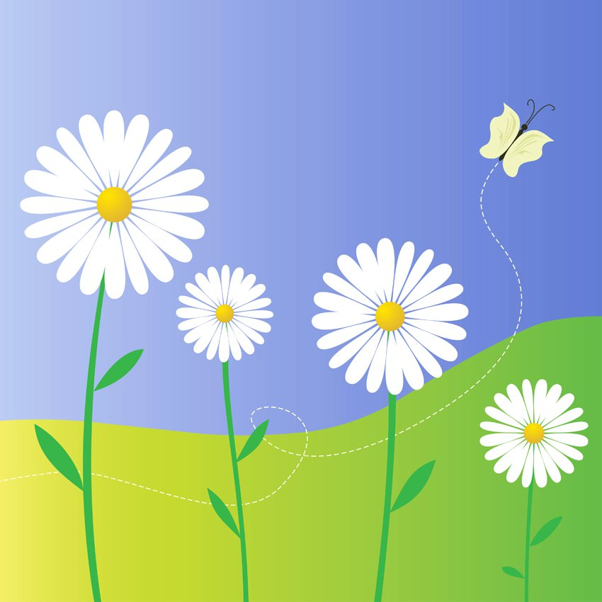 850x850 Daisy Flowers Vector Art Amp Graphics