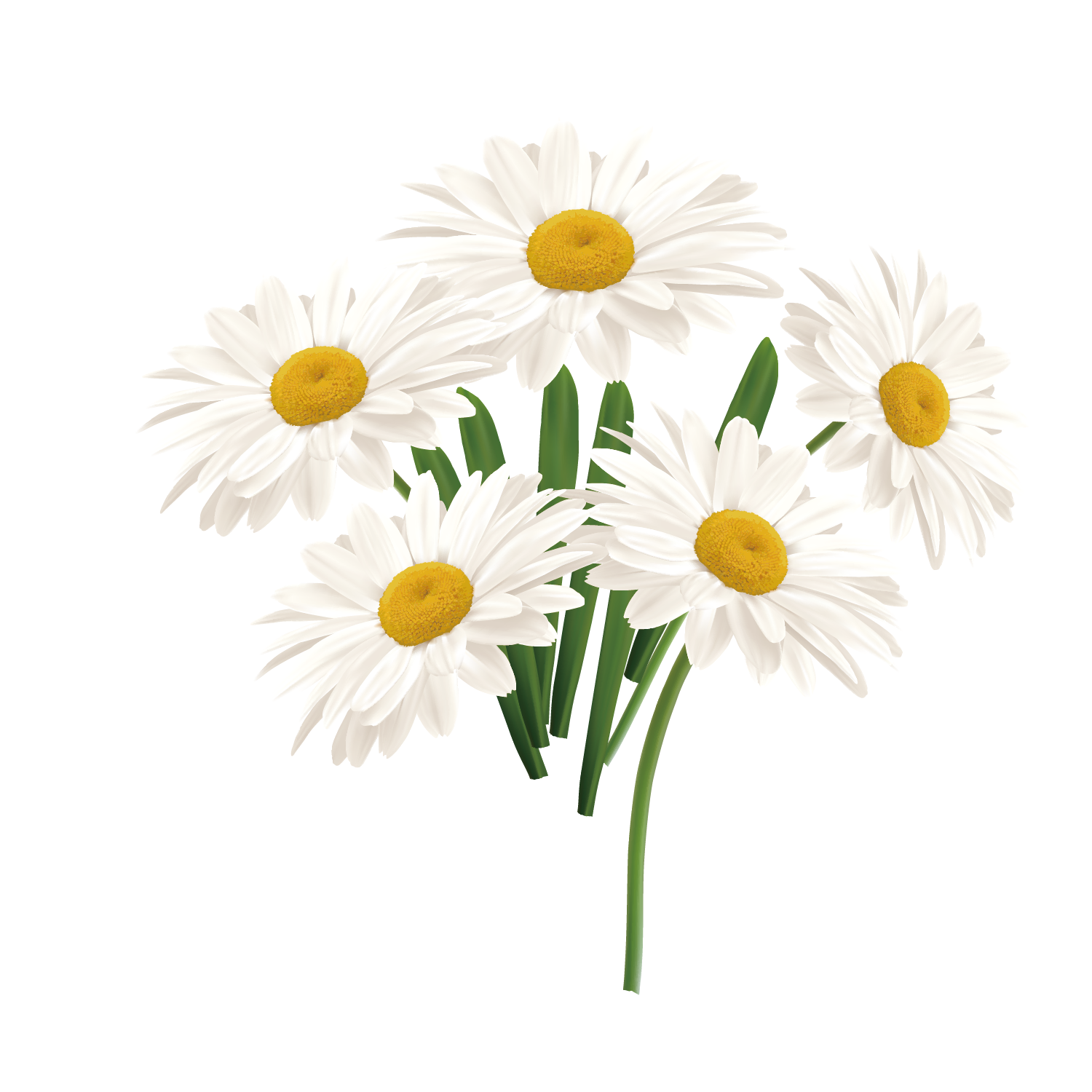 1500x1500 Flower Common Daisy