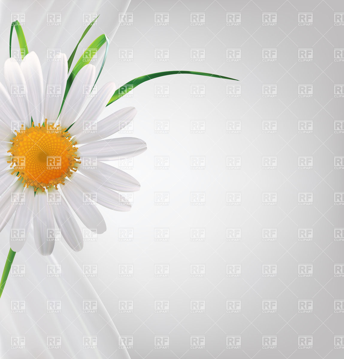 Daisy Vector Free At Getdrawings Free For Personal Use Daisy