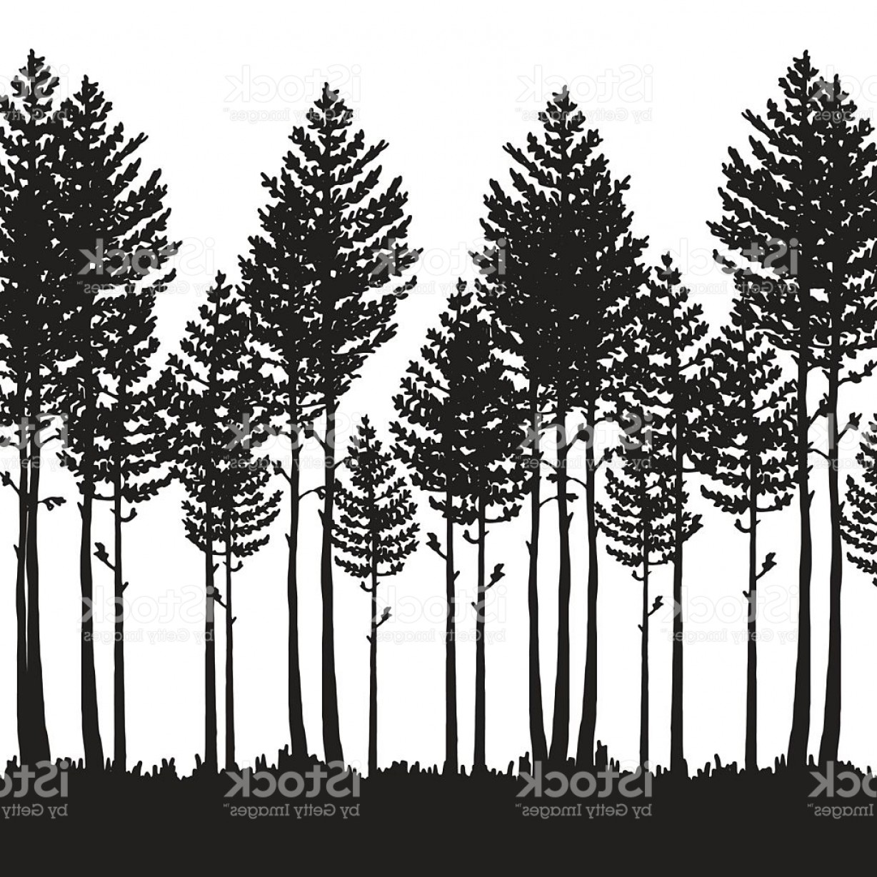 1228x1228 Vector Pine Forest Landscape Dark Forest With Pine Trees Gm