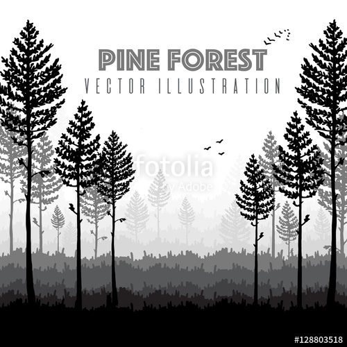 500x500 Vector Pine Forest Landscape. Beautiful Hand Drawn Illustration