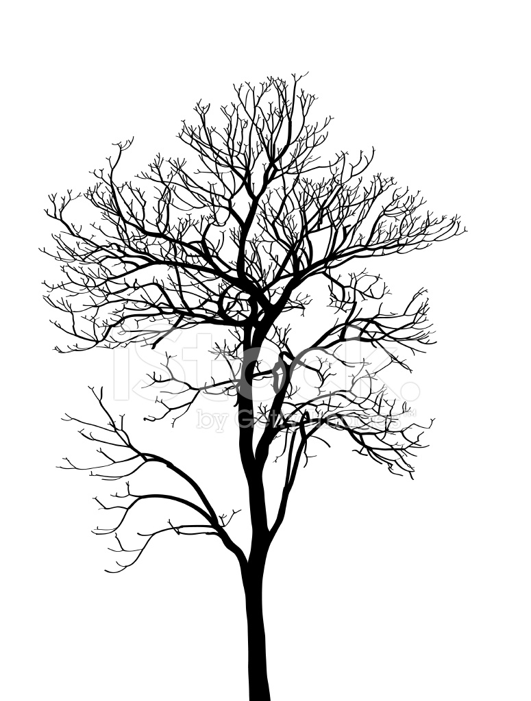 775x1024 Dead Tree Without Leaves Vector Illustration Stock Vector