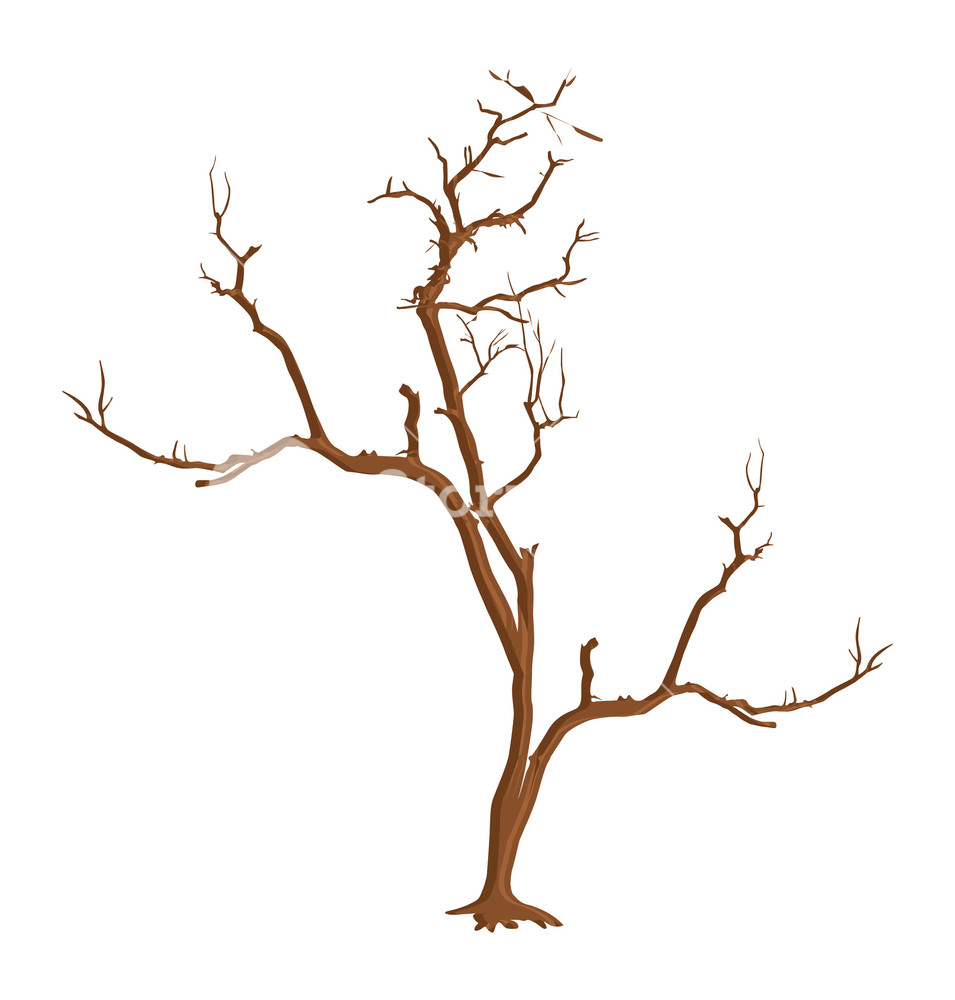 955x1000 Dry Dead Tree Shape Vector Royalty Free Stock Image