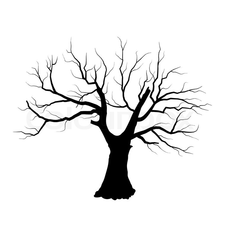 760x800 Illustration Sketch Of Dead Tree Without Leaves , Isolated On