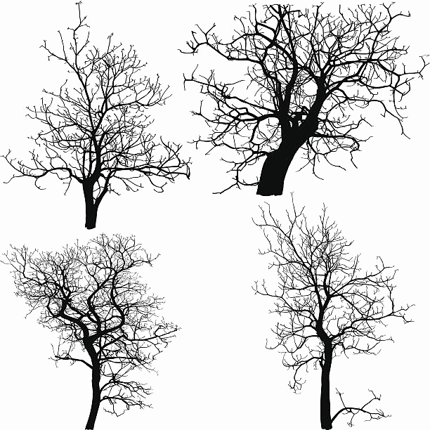 612x612 Tree Outline Printable Lovely Dead Tree Outline Awesome Royalty