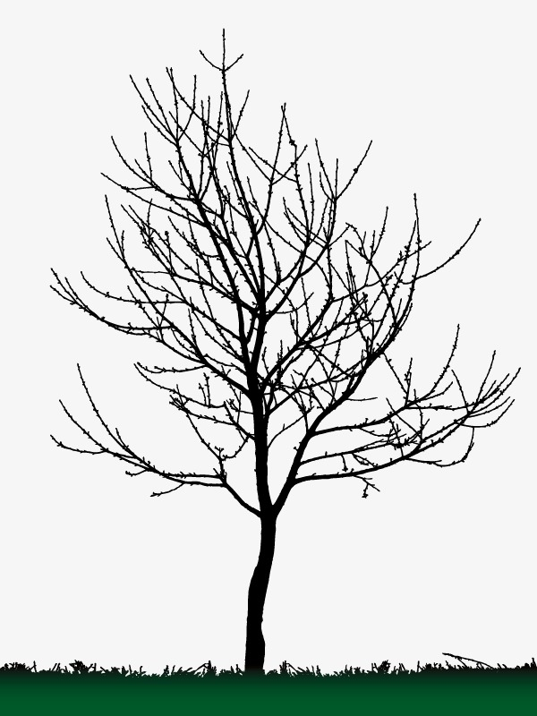 600x800 Background Decoration Dead Tree Silhouette Vector, Decoration