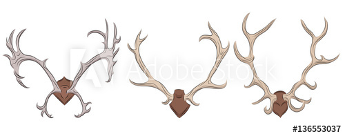 500x197 Set Of Different Deer Antlers. Vector Element For Your Design
