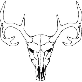340x340 Deer Skull Vector Free 123freevectors