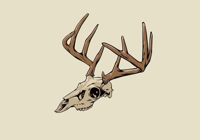 700x490 Deer Skull Vector Illustration