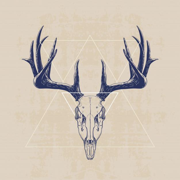 626x626 Deer Skull Vector Premium Download