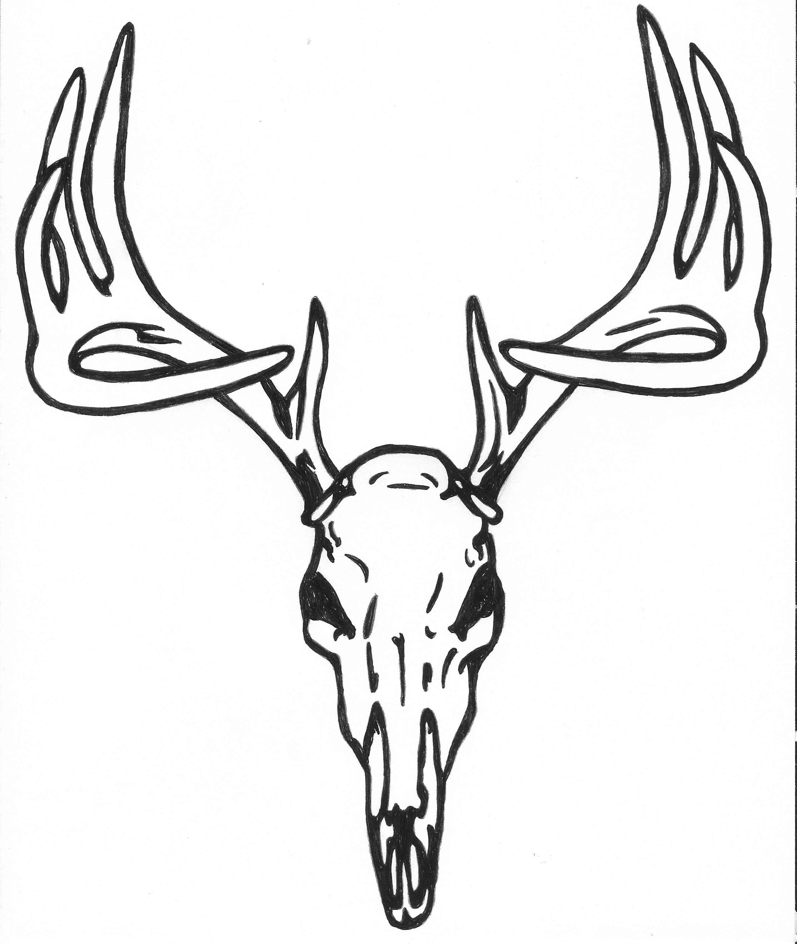 2552x3023 Drawn Deer Skull