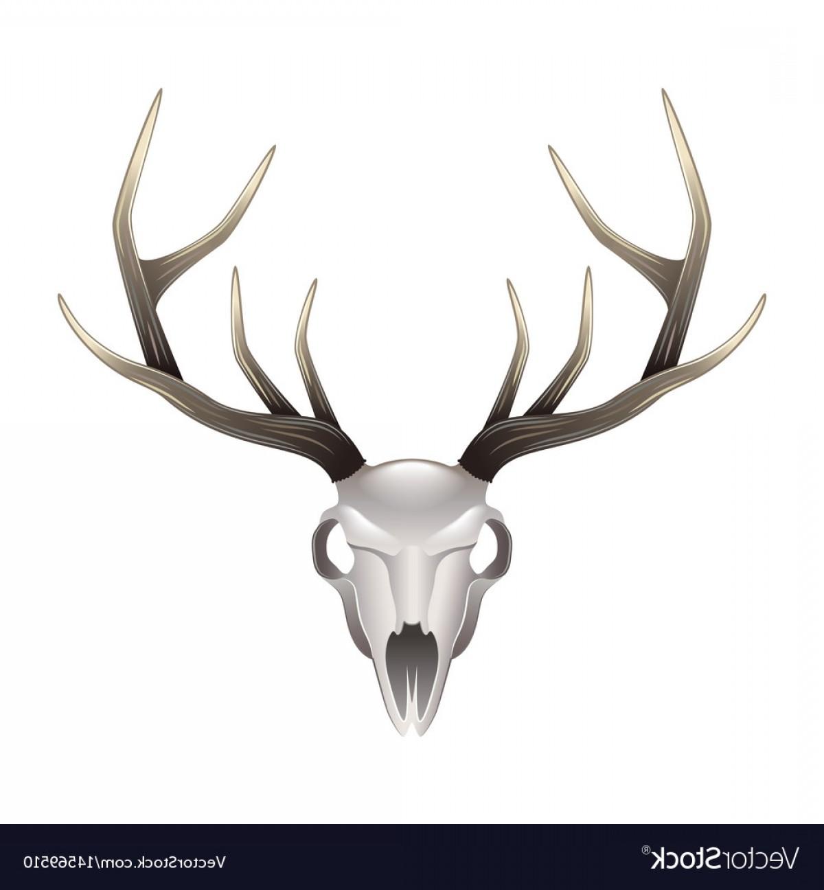 1200x1296 Elk Skull Vector Art Arenawp