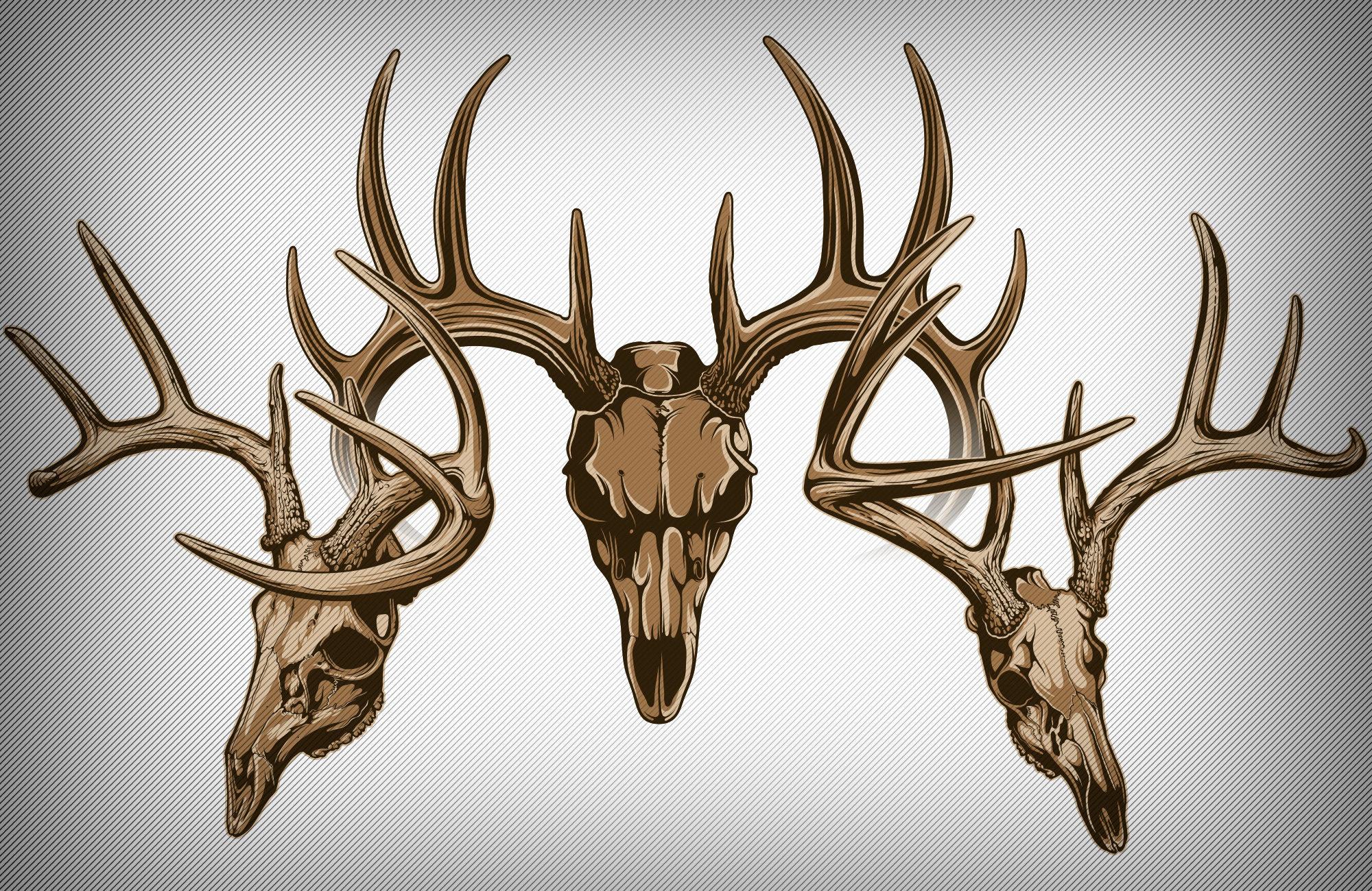 2000x1300 Images Of Deer Skull Vector