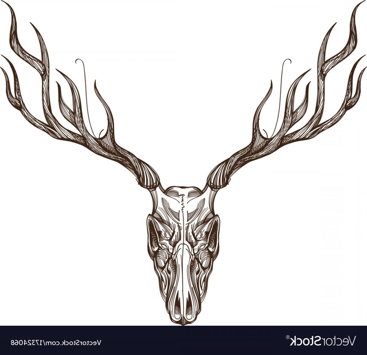 1200x1162 Sketch Of Deer Skull Outline For Tattoo Printing Vector Lazttweet