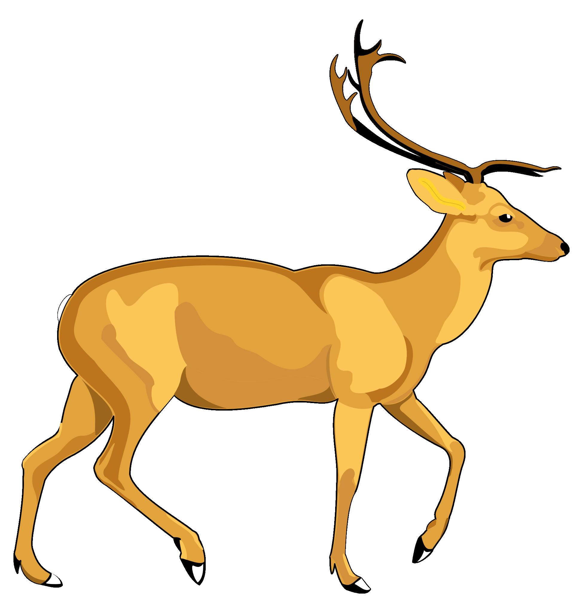 1950x2050 Deer Vector Png Image