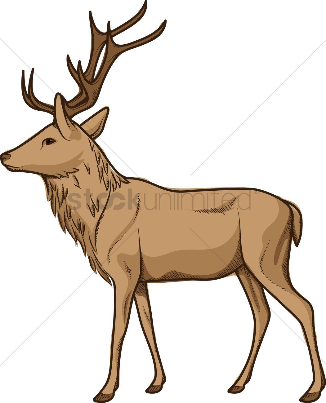1051x1300 Male Deer Vector Image