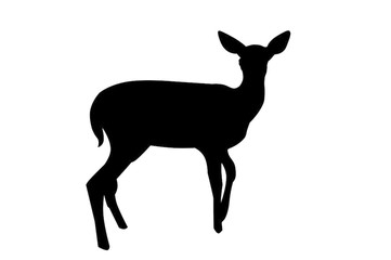 361x240 Deer Vector Photos, Royalty Free Images, Graphics, Vectors