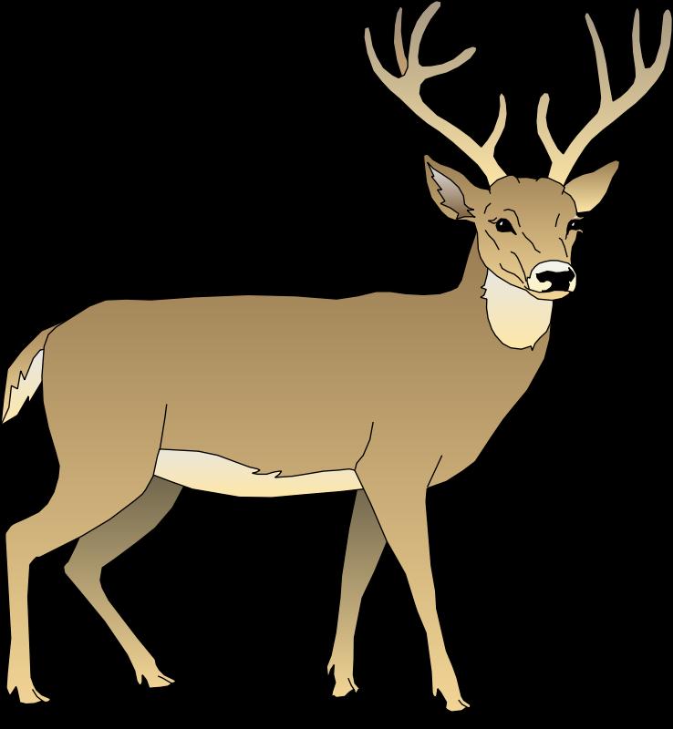 738x800 Deer 5 Free Vector 4vector