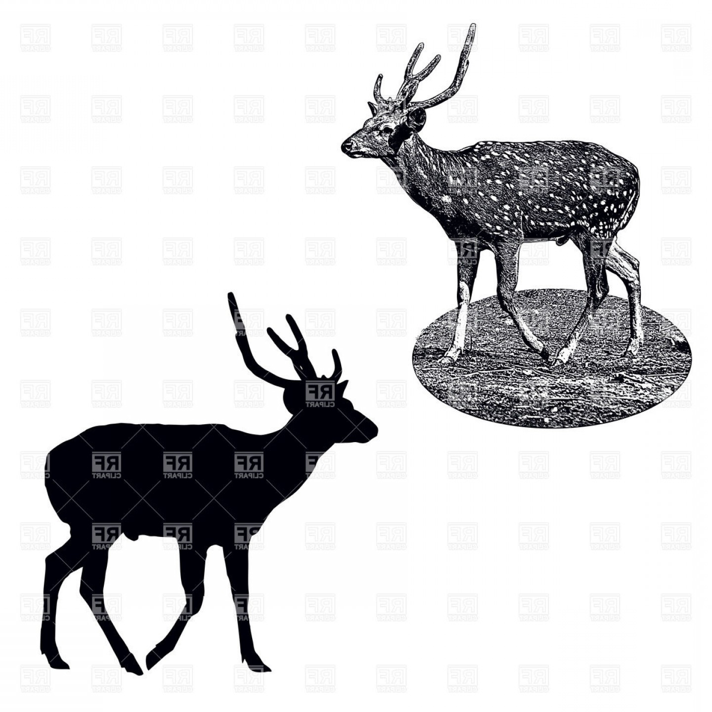 1440x1440 Silhouette And Shading Style Profile Of Male Of Spotted Deer