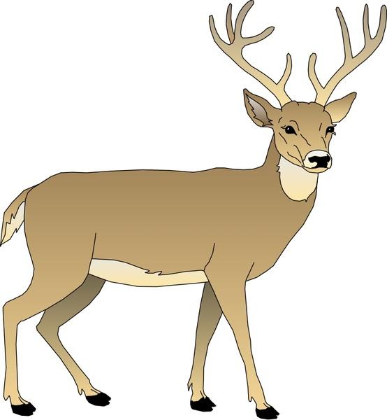 554x600 Deer 5 Free Vector In Open Office Drawing Svg ( .svg ) Vector
