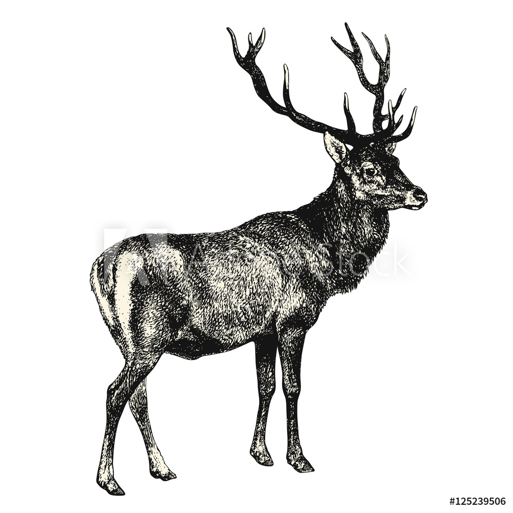 1000x1000 Photo Amp Art Print Vintage Animal Engraving Drawing Deer
