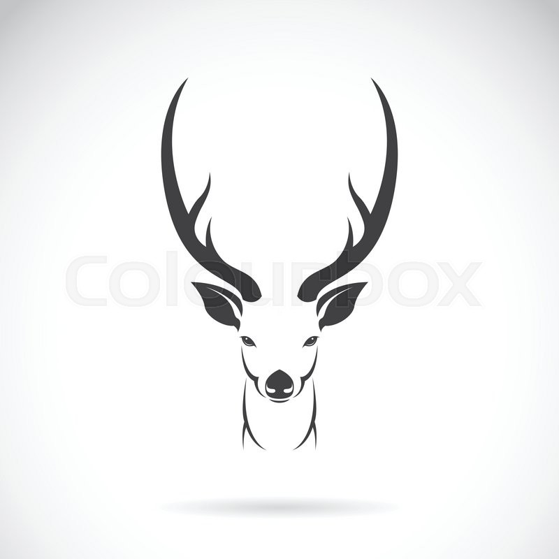 800x800 Vector Image Of An Deer Head Design On White Background, Vector