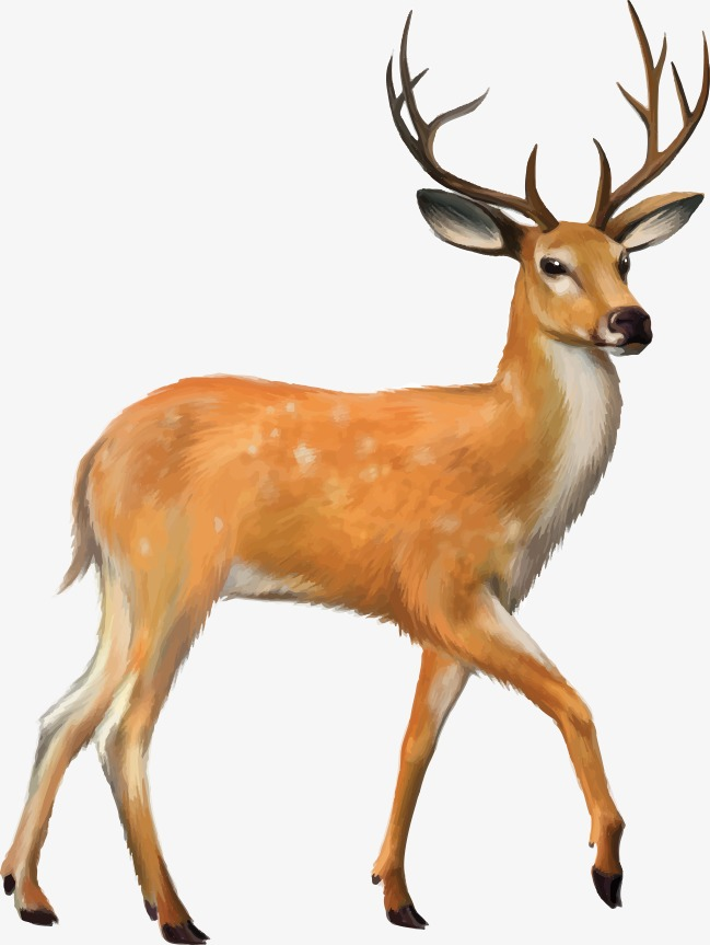 649x863 Deer,, Deer, Deer Vector, Vector Png And Psd File For Free Download
