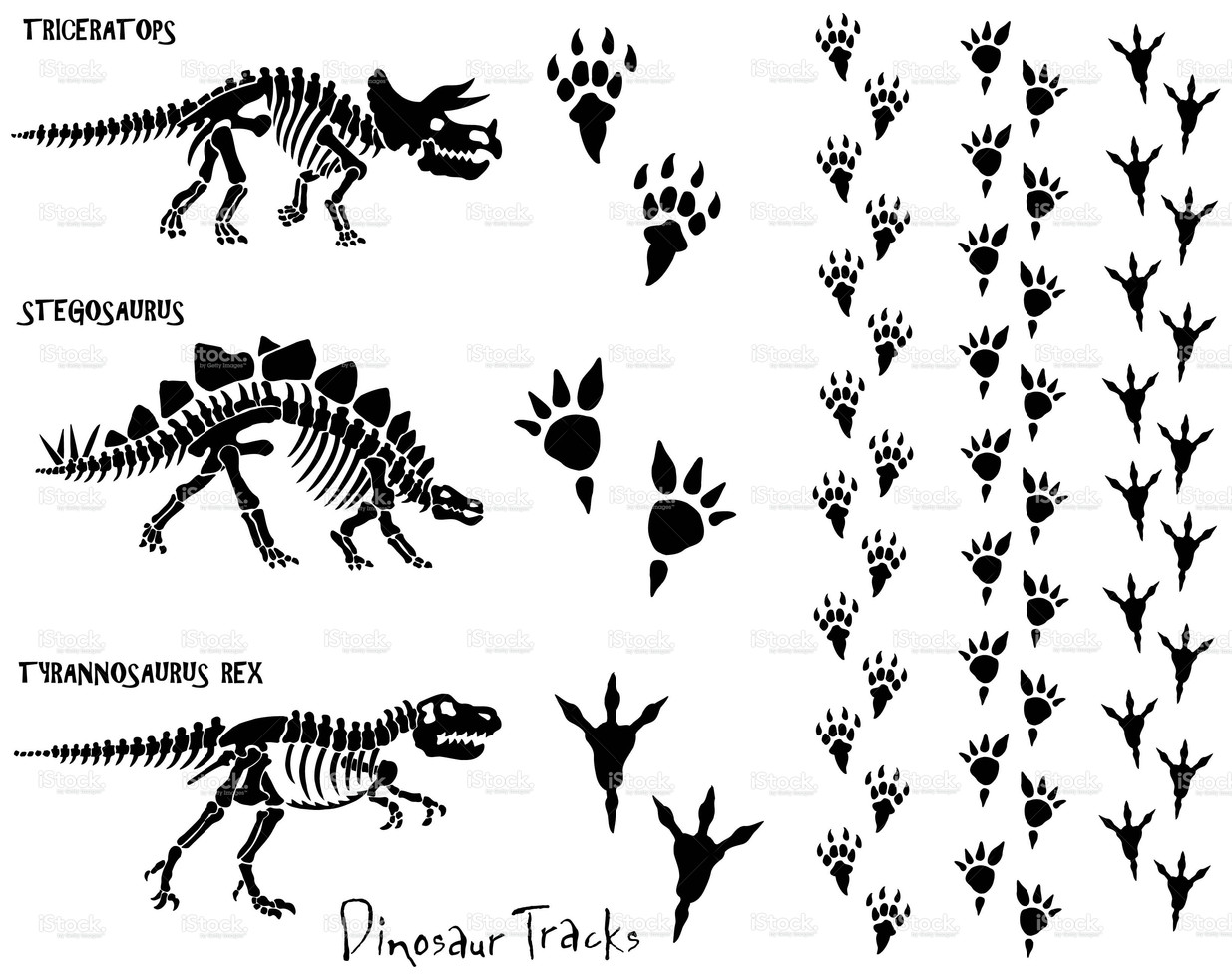 1235x982 Dinosaur Skeletons And Foot Prints. All Elements Are Grouped For