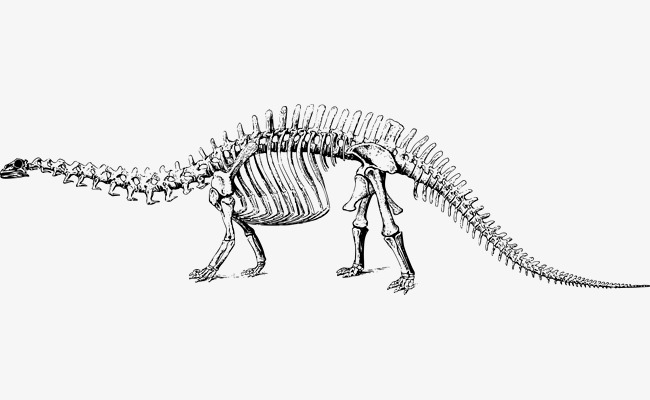 650x400 Vector Dinosaur Skeleton, Dinosaur Vector, Skeleton Vector