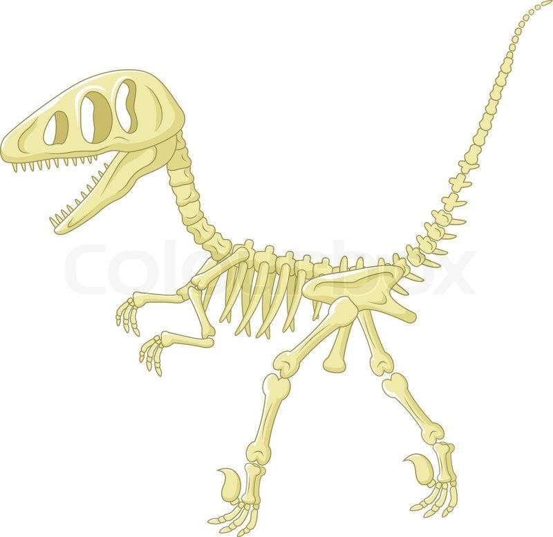 800x777 Vector Illustration Of Cartoon Dinosaur Skeleton Stock Vector