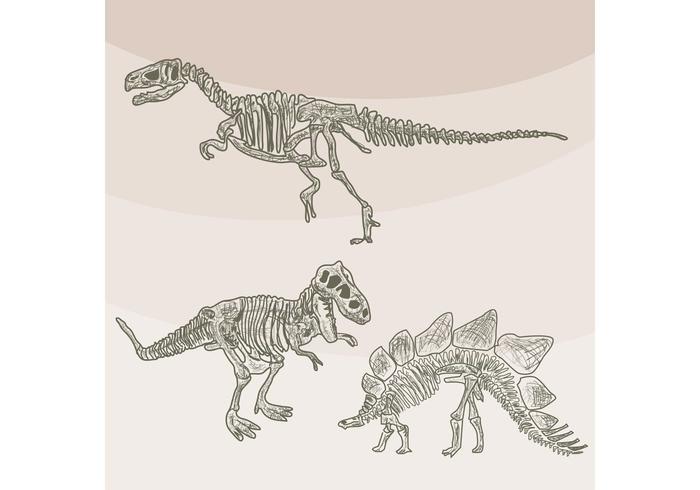 700x490 Dinosaur Bones Vectors