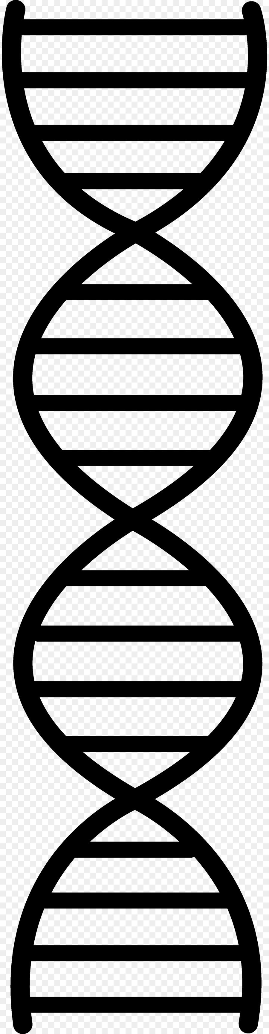 900x3460 Dna Replication Nucleic Acid Double Helix Clip Art