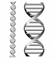 184x200 Dna Helix Free Vector Graphic Art Free Download (Found 161 Files