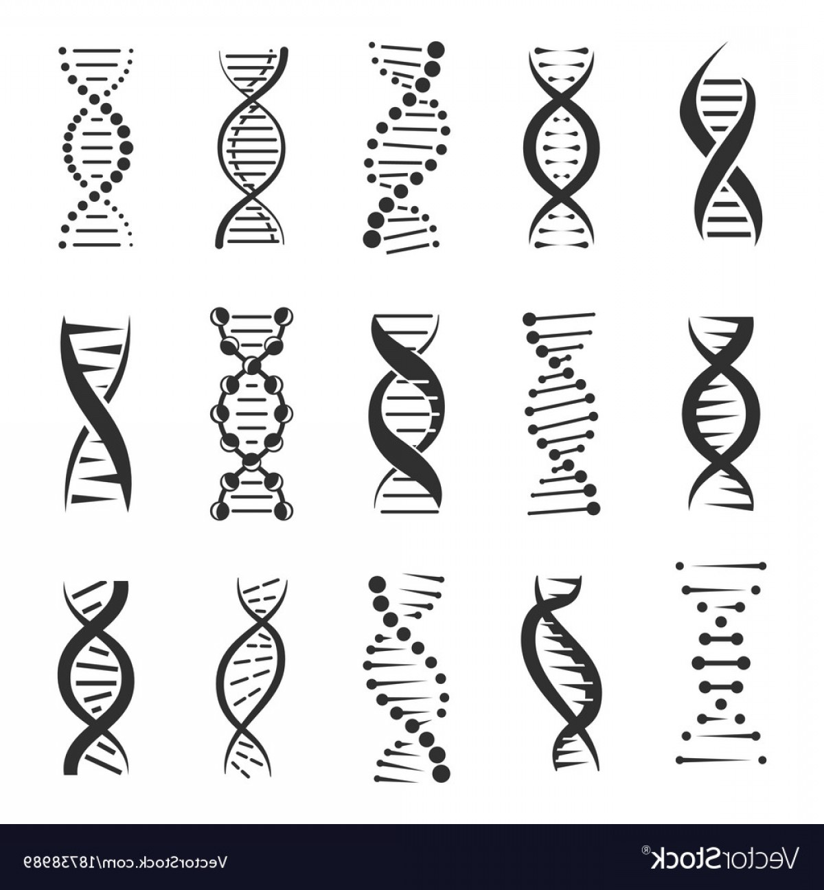 1200x1296 Double Dna Helix Icons Vector Arenawp