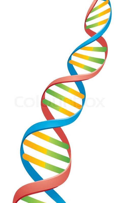 480x800 Vector Illustration Of A Double Helix Dna Strand Stock Vector