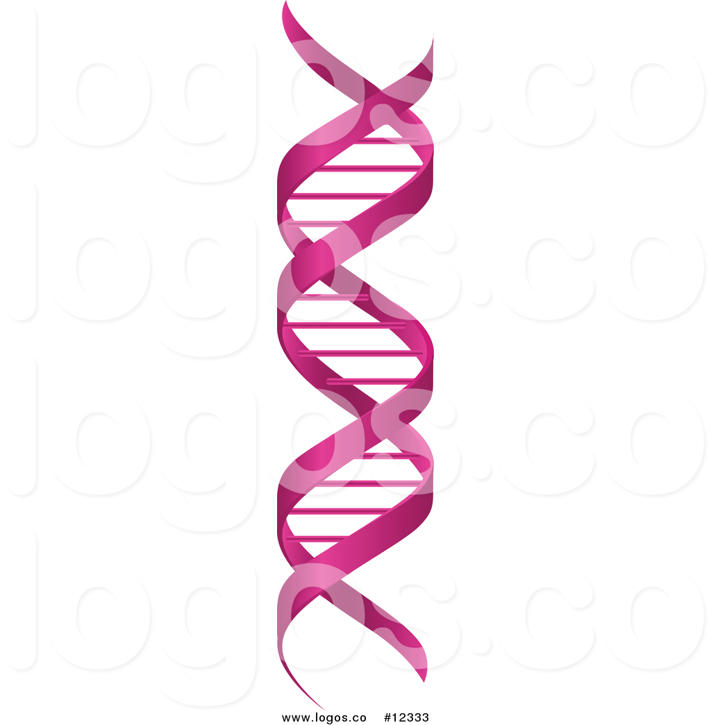 1024x1044 Collection Of Free Helices Clipart Dna Strand. Download On Ubisafe