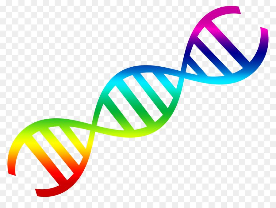 900x680 Dna Nucleic Acid Double Helix Clip Art