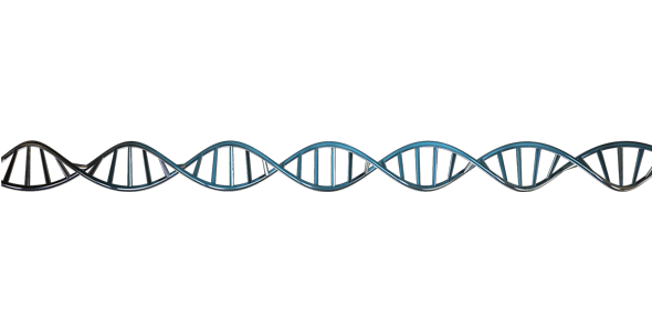 590x300 Dna Strand 3d Animated With Alpha Loop By Matzunaga Videohive