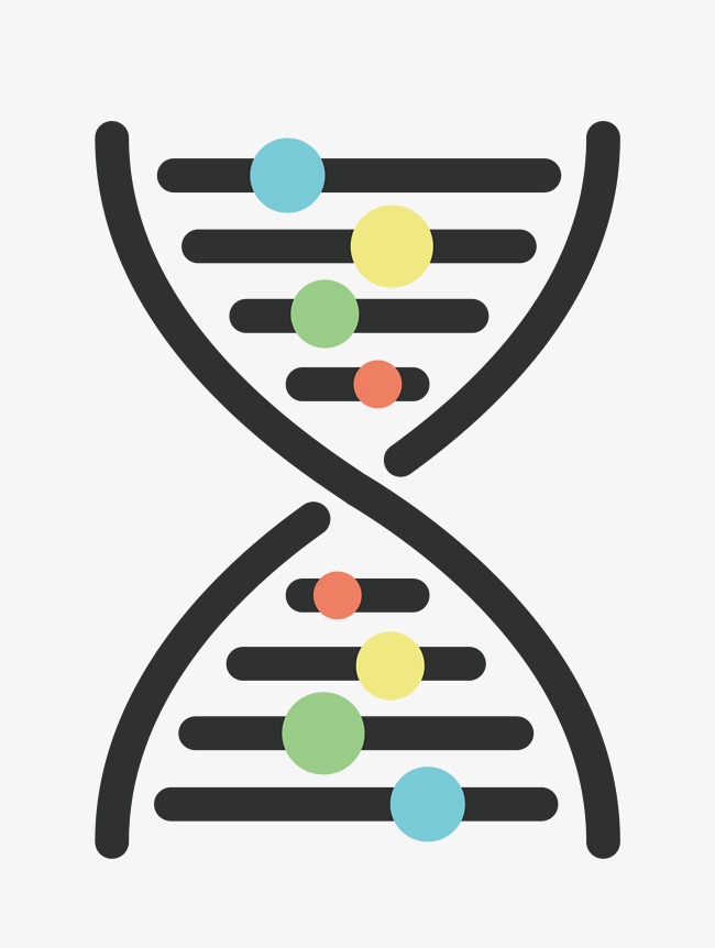 650x862 Vector Dna Structure Material, Vector Material, Dna, Structure Png