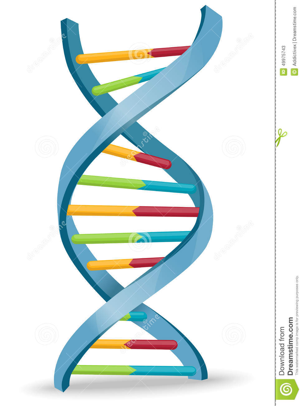 972x1300 Dna Clipart Dna Structure