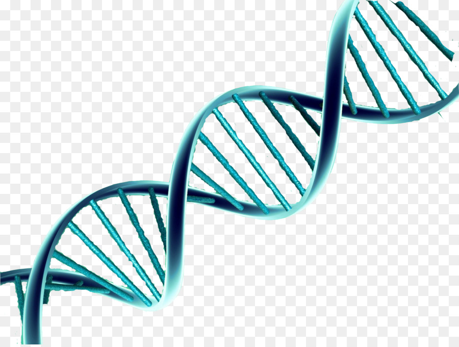 900x680 Download Double Helix Vector Png Clipart Nucleic Acid Double Helix