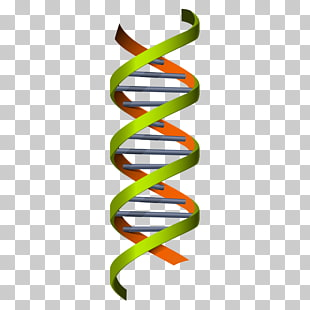 310x310 Page 2 4,056 Dna Png Cliparts For Free Download Uihere