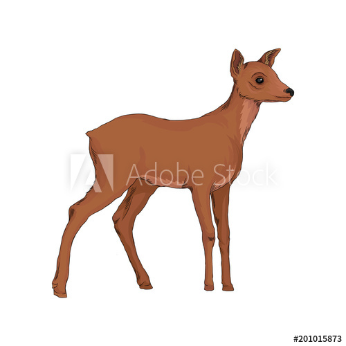500x500 Doe Wild Northern Forest Animal Vector Illustration On A White